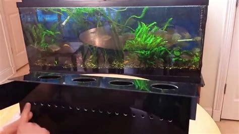 indoor aquaponics system   grow vegetables
