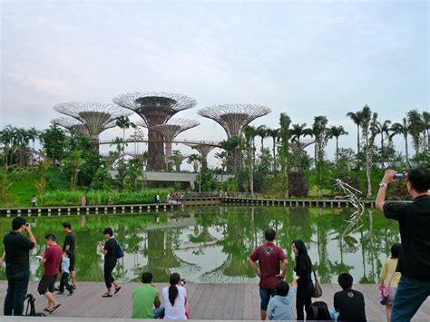 Type Of Trees by File Supertree Grove Gardens By The Bay Singapore