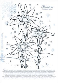 edelweiss flower coloring page edelweiss printed embroidery cross stitch pattern on