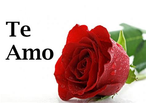 frases y pensamientos con rosas imagenes con rosas y frases de amor imagenes de amor