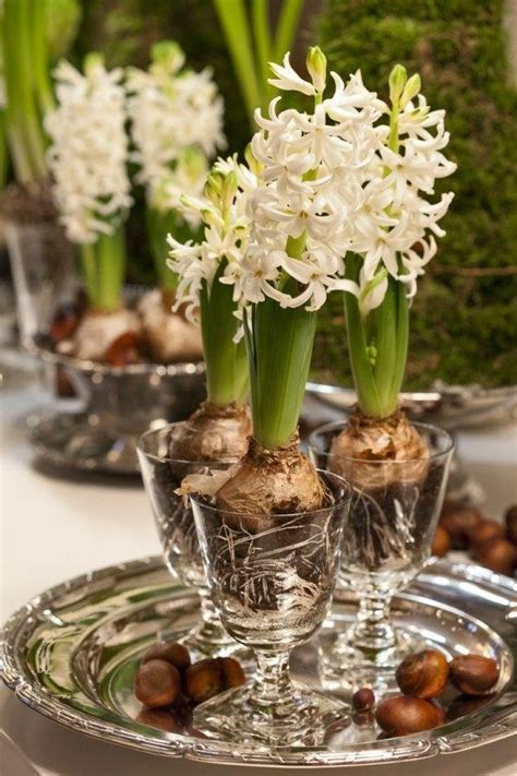 giacinti in casa bulbi in vaso la primavera in casa charme and more