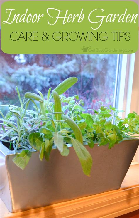 herb gardens how to grow herbs indoors and out indoor herb garden tips a guide to successful indoor herb