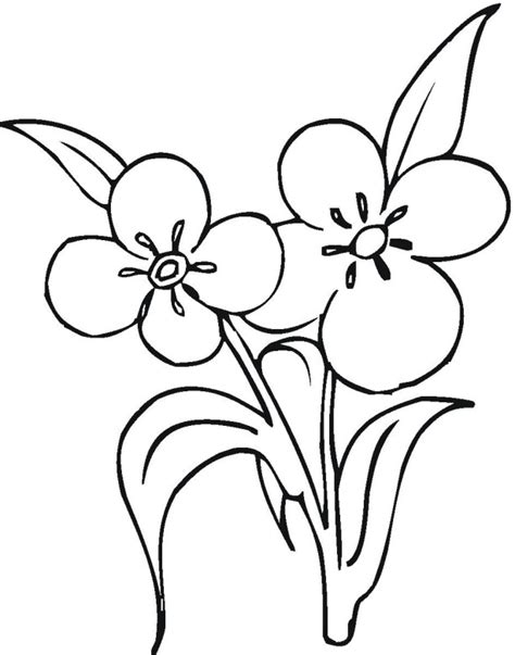 coloring pages of flowers that you can print free flower coloring pages clipart best