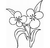 Flower Coloring Pages PinterestFree For