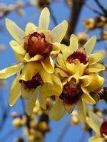 elenco di fiori in ordine alfabetico arbusti in ordine alfabetico