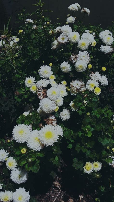 flowers pale tumblr grunge aesthetic sad tumblrgirl