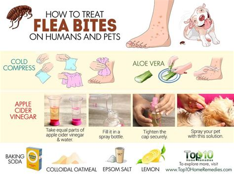 how to treat fleas on dogs 17 best images about grooming health safety on poodles yorkie and