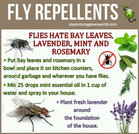 fly repellent tips tricks and ideas pinterest