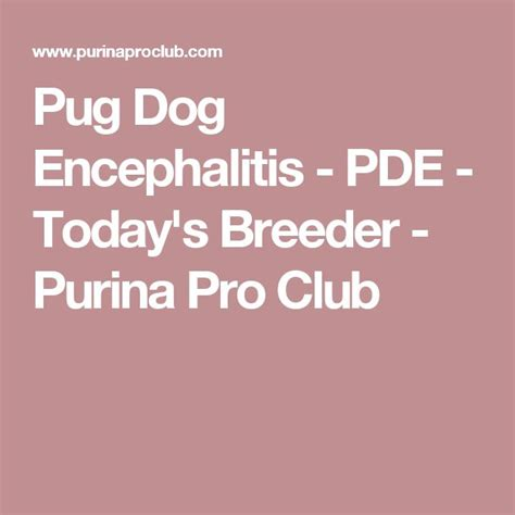 pug encephalitis pde 25 best ideas about pug breeders on breeders pug puppies and baby