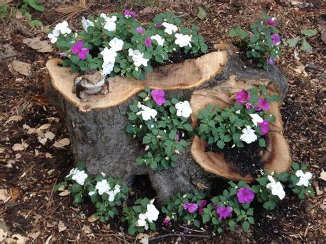 Stump Planter by Try A Tree Stump Planter Uconnladybug S