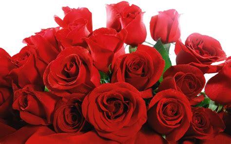 rosse fiori foto sfondo quot rosse quot 1440 x 900 natura fiori fulmini