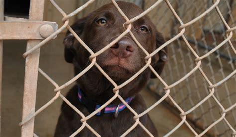 animal shelter city of elk city oklahoma