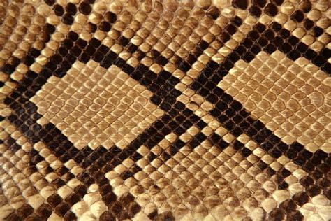 snake skin print on behance snakeskin materials pinterest alligators and wallpaper