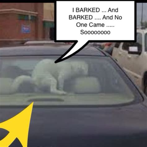 Dog In Car Meme - dont leave dogs in cars doggy puppy puppies meme