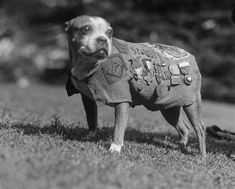 Sergeant Stubby Quotes War