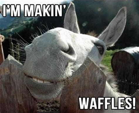 Donkey Meme - 30 funny animal captions part 13 30 pics amazing