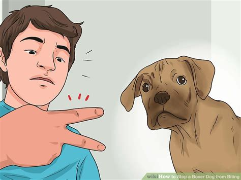 breaking a puppy from biting 3 ways to stop a boxer from biting wikihow