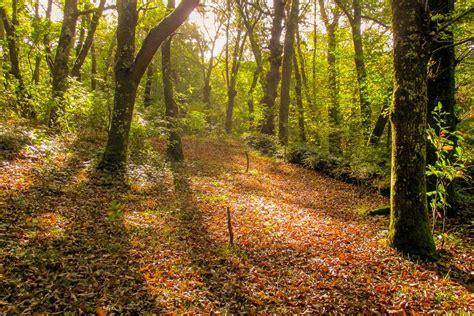por una gentil floresta 8426374646 tipos de bosques de espa 241 a