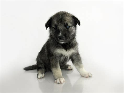 black names puppies black puppy dogs puppies names breeds and grooming