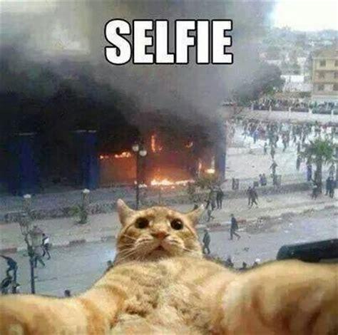 Selfie Meme Funny - cat selfie fire department humor fire department
