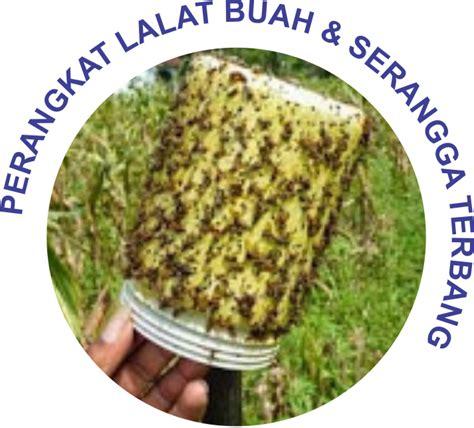 Lem Metilat Perangkap Lalat Buah Nasa Jakarta metilat empon empon