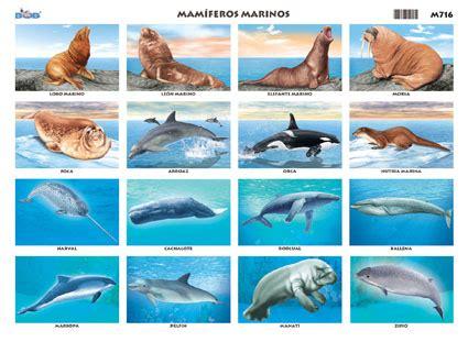 los animales marinos marine 8467535709 mam 237 feros marinos