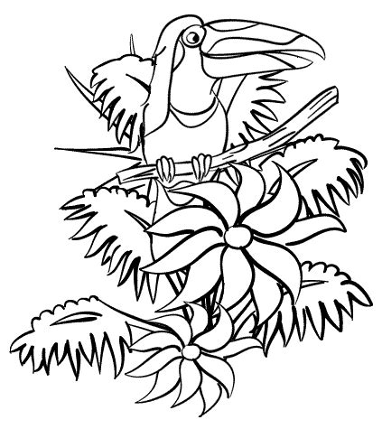 rainforest coloring pages coloring pages to print