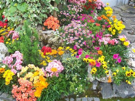 i fiori semplici i fiori semplici e bellissimi fotograf 237 a de vatican
