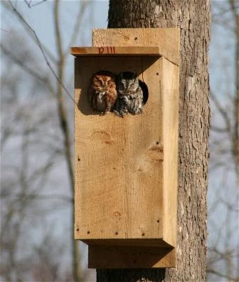 eastern screech owl nest box plans image search results