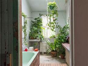 bathroom plant the plants that will actually thrive not die in your
