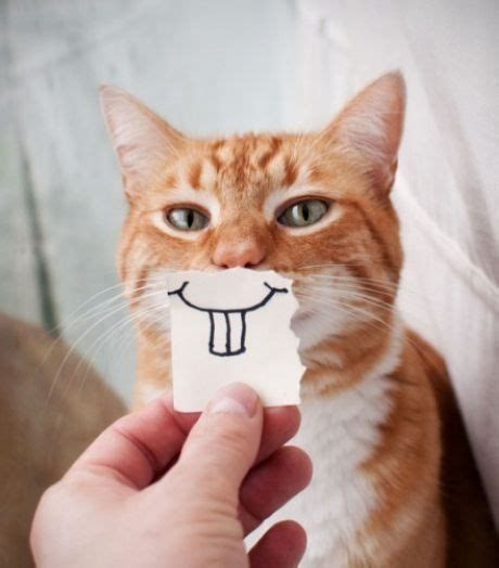Smiling Cat cats with paper smiles juppppy s