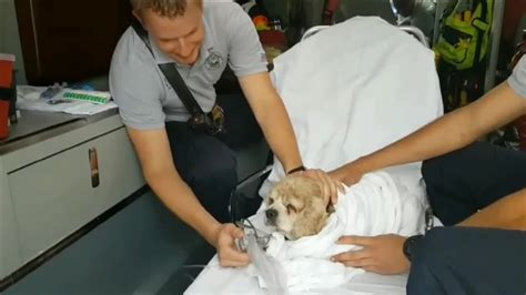 dog house miami gardens blind dog rescued from miami gardens lake by good samaritans