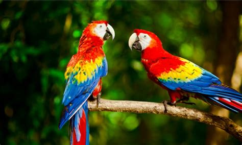 12 most beautiful colorful birds of the world