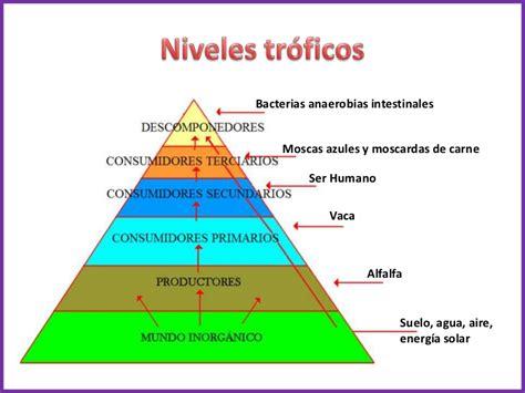 cadenas alimentarias piramides ecologicas niveles tr 243 ficos
