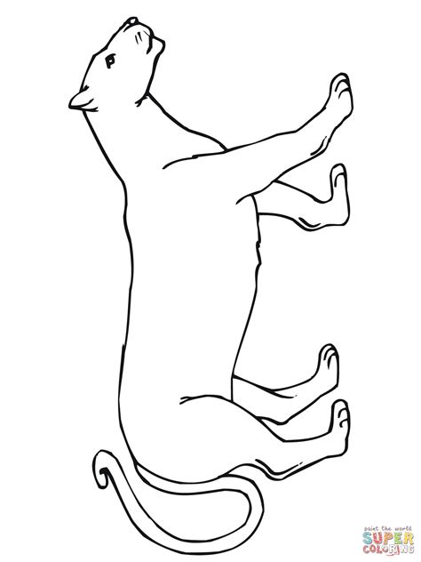 walking mountain lion coloring page free printable
