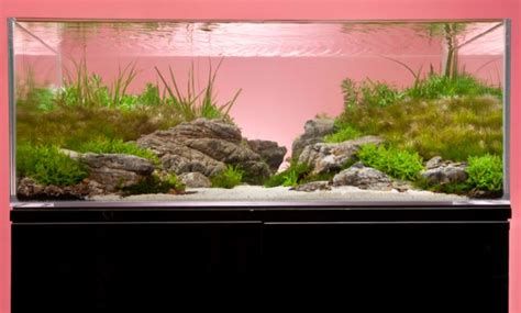 How To Set Up An Aquascape by A Thoroughly Modern Aquascape Practical Fishkeeping Magazine