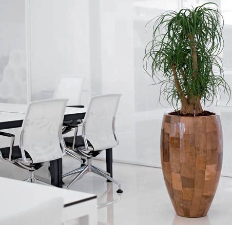 plants for office office plants office plant hire ambius uk