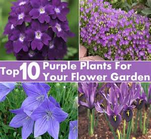 top 10 purple plants for your flower garden diy cozy