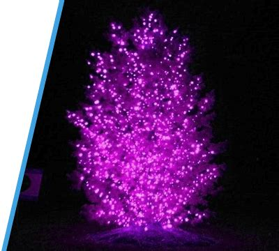 collection where to buy purple christmas lights pictures