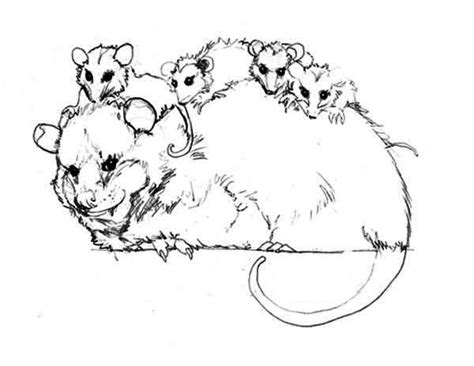 possum colouring pages coloring home