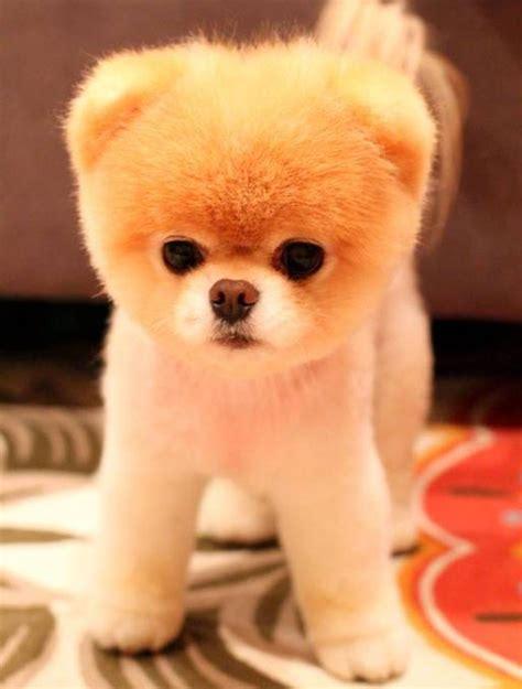 imagenes de animales adorables 20 fotos de perros que parecen aut 233 nticos peluches