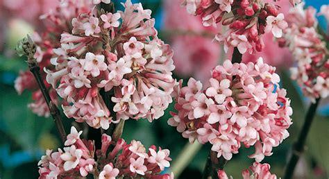 Alberi Da Fiore Per Giardino by Macchie Di Colore Nel Vostro Giardino Gli Alberi Da Fiore