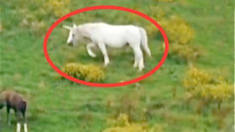 imagenes de unicornios bebes reales 5 unicornios quot reales quot captados en c 225 mara youtube