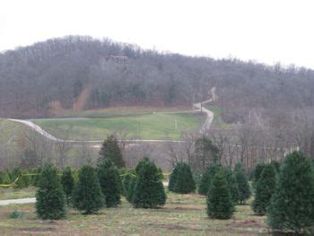 cut your own christmas tree lexington ky where to cut your own tree near louisville
