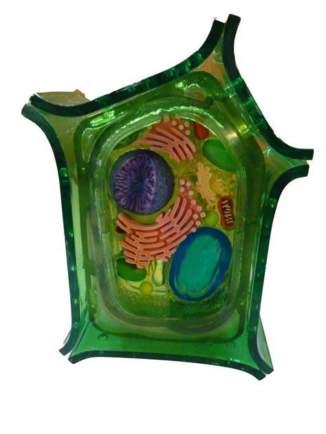 modele  de cellules avec pieces detachables cellule