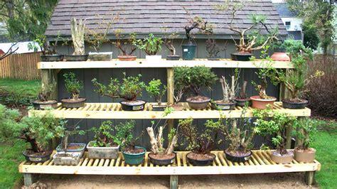 bench en español donde situo los bonsais foro de infojardn