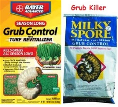 how to kill grubs naturally lawn grubs how to treat them effectively in early media