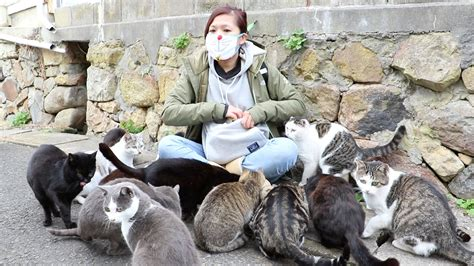 cat island japan it s like that quot cat lady quot but an girl swarmed by cats on japan s cat island youtube