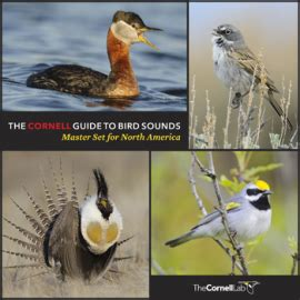master set of 4 938 downloadable bird sounds released by