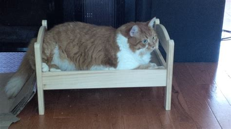 Why Do Cats On Beds by 19 Cats Who Understand Doll Beds Were Invented Just For Them